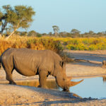 White Rhino on African family safari