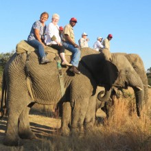 A group of travelers enjoying a ride on an African Elephant